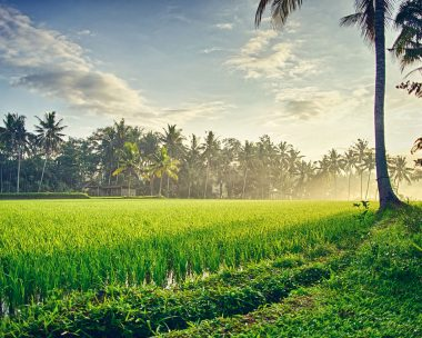 Things You Need To Know Before Visiting Ubud, Bali